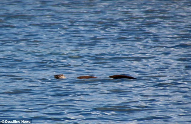 loch ness daily mail otter by jonathan