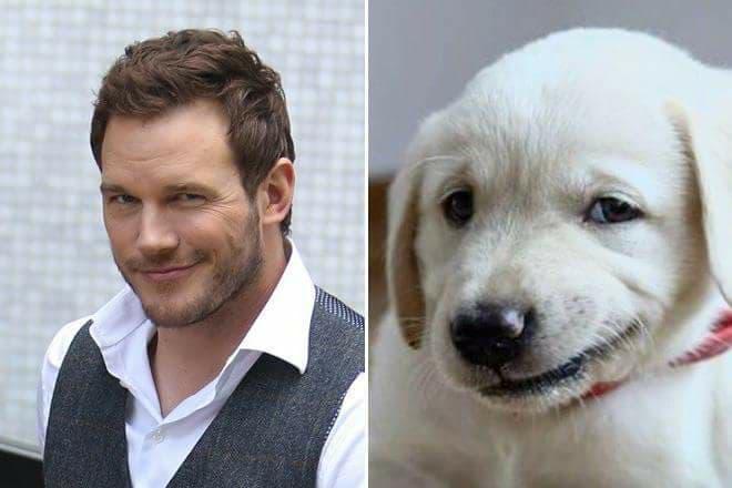 animali assomigliano alle star celebri