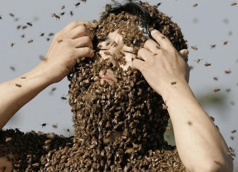 api, agopuntura, veleno, morte