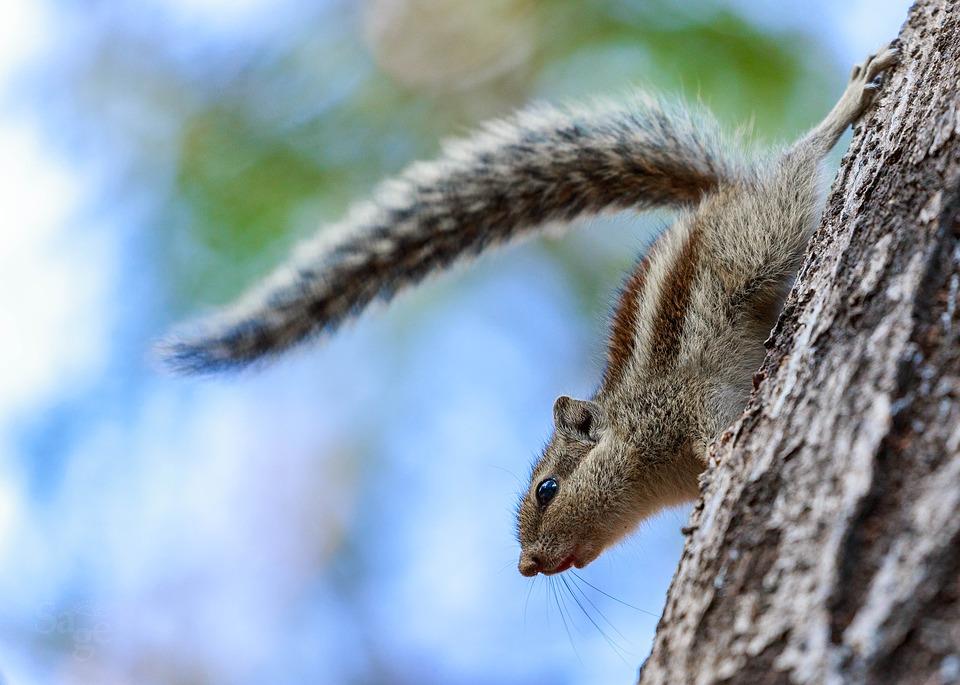 Donna addestra scoiattoli contro l'ex