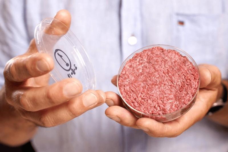 carne, umana, cellule, biologo
