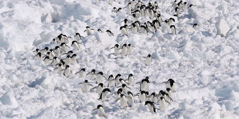 cacca pinguini