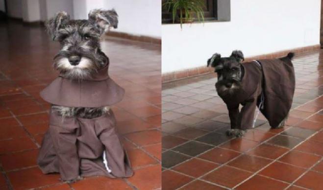 cane-diventato-frate