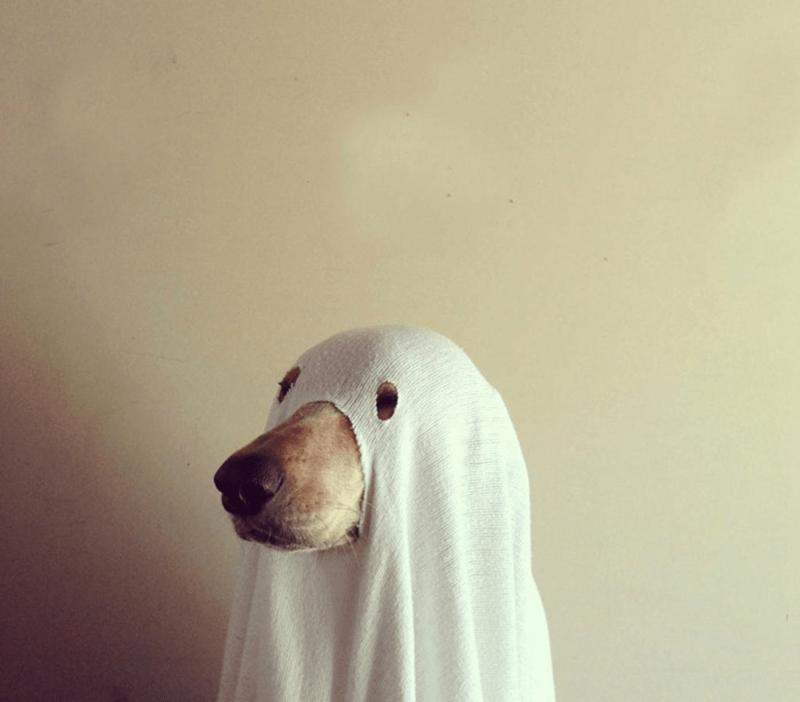 cane-nascosto