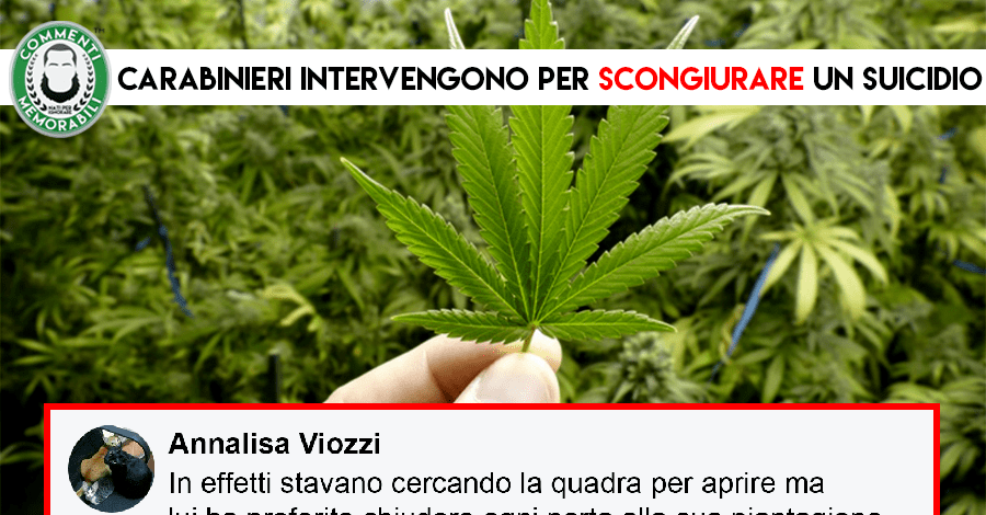 carabinieri scoperta piantagione marijuana