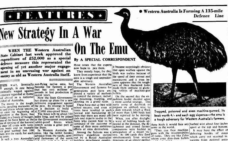 La guerra degli emù