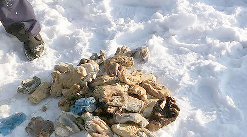 Le mani ritrovate in Siberia