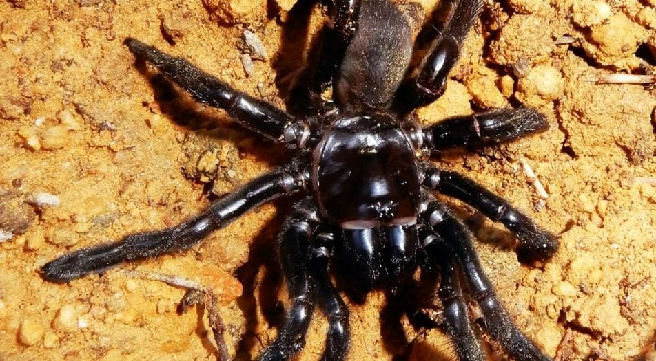 ragno, veleno, vecchio, vespa
