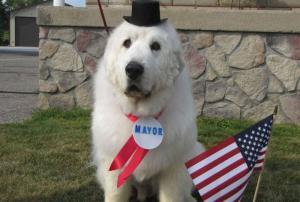 cane, sindaco, elezioni, pensione