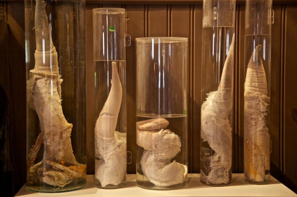 il museo del pene in Islanda