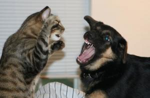 gatti, bullismo, cane, denuncia