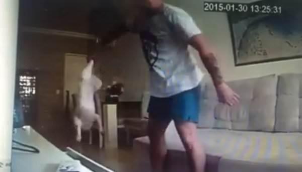 fidanzato cane annulla matrimonio