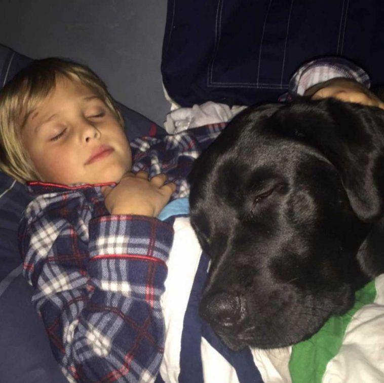 labrador salva la vita al bambino commenti memorabili