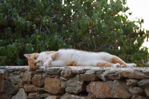 Accarezzatori di gatti Grecia