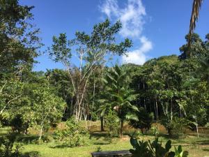 Ayahuasca foresta Amazzonica