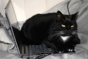 Gatti e attenzioni