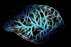 BrainNet e cervello umano