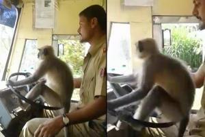 La scimmia nel pullman indiano