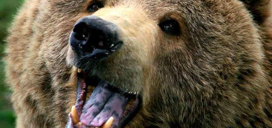 L 39 orso che fa il bagno nel lago giornalettismo - Bambolotti che fanno il bagno ...