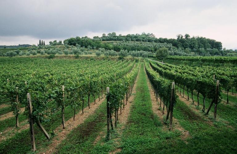 Contare fino a dieci prima di dire: «L'Europa è cattiva, ci toglie l'alcol dal vino»