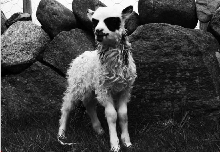 L'agnellino black metal che sta facendo impazzire la ...