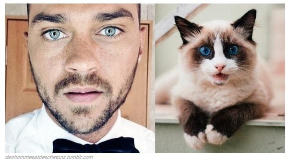 I 31 gattini che sono pi belli dei divi di hollywood giornalettismo - Altezza divi di hollywood ...