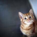 gatto dimostra affetto