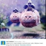 bruxelles polizia gattini twitter