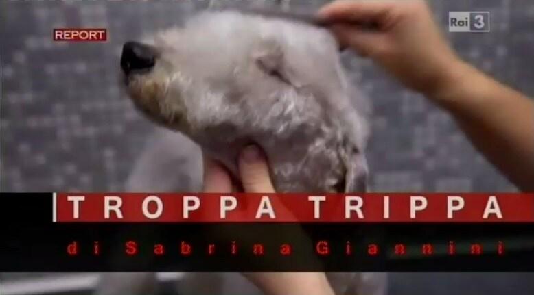 Report E Il Cibo Di Cani E Gatti Cosa Cè Dentro Giornalettismo