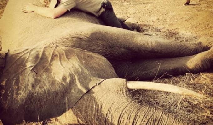 principe-harry-elefante-sudafrica-foto
