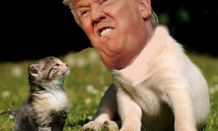 trump gattini su trump