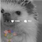 Huff Instagram