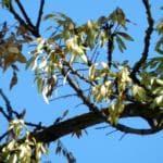 allergie aprile