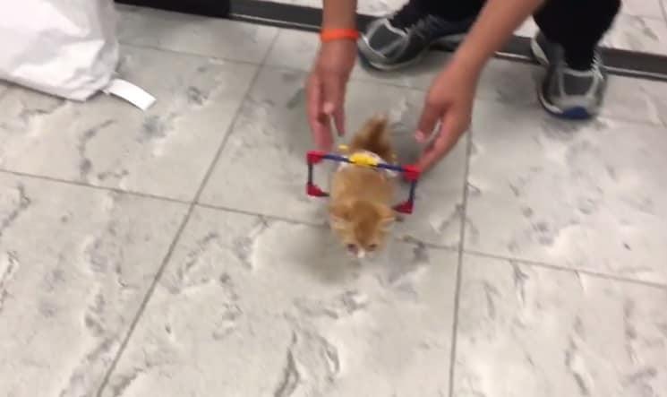gatto lego