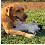 Cani foto Instagram