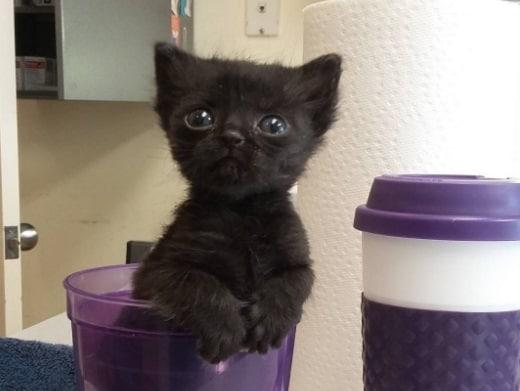 gatto micro