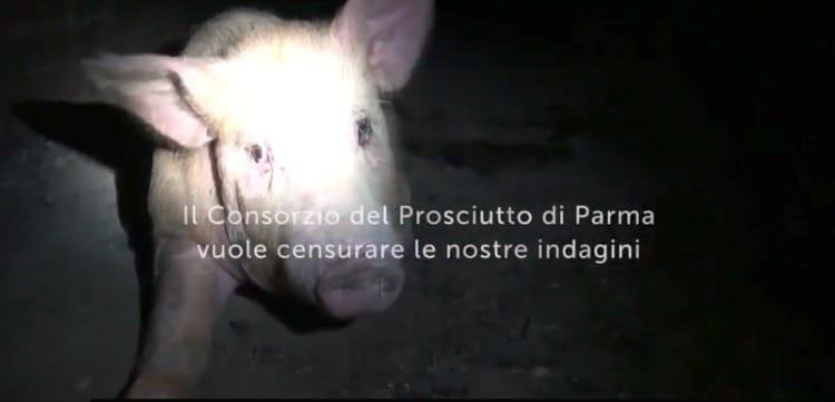 prosciutto Parma
