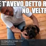 veltroni cane meme