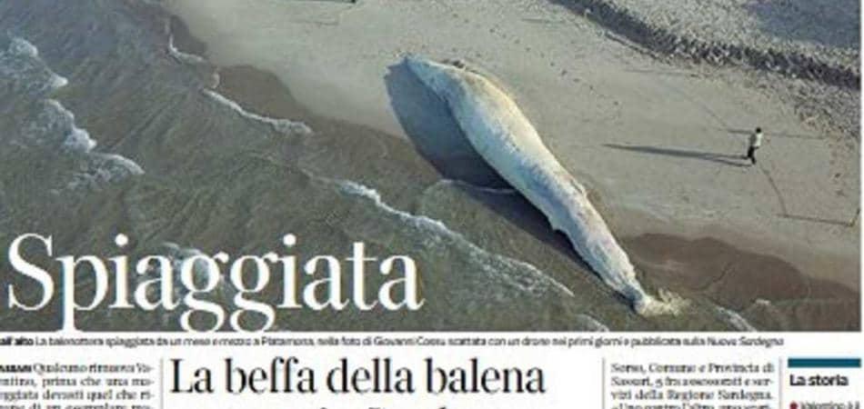 balena spiaggiata platamona