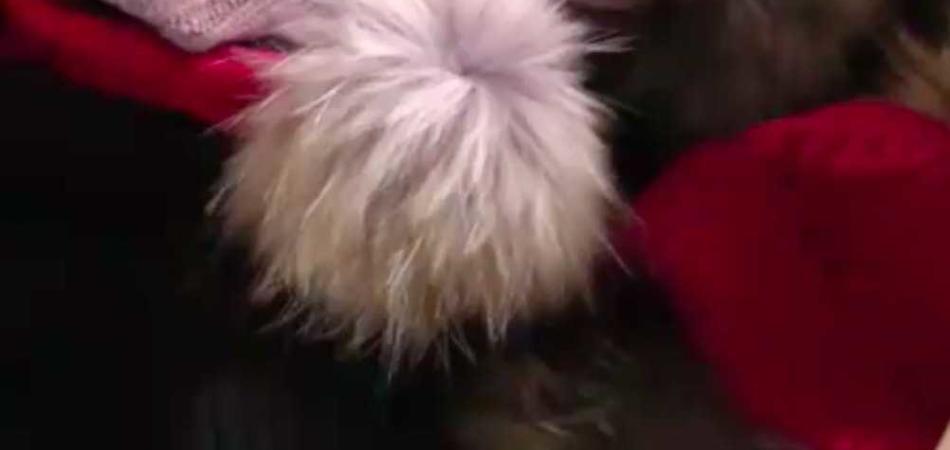 pellicce vere spacciate per sintetiche