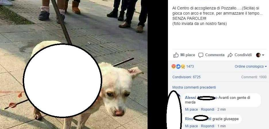 cane pozzallo