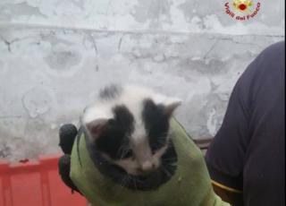 genova gattino