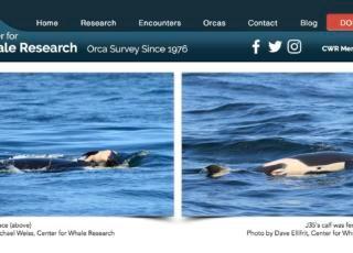 orca mamma