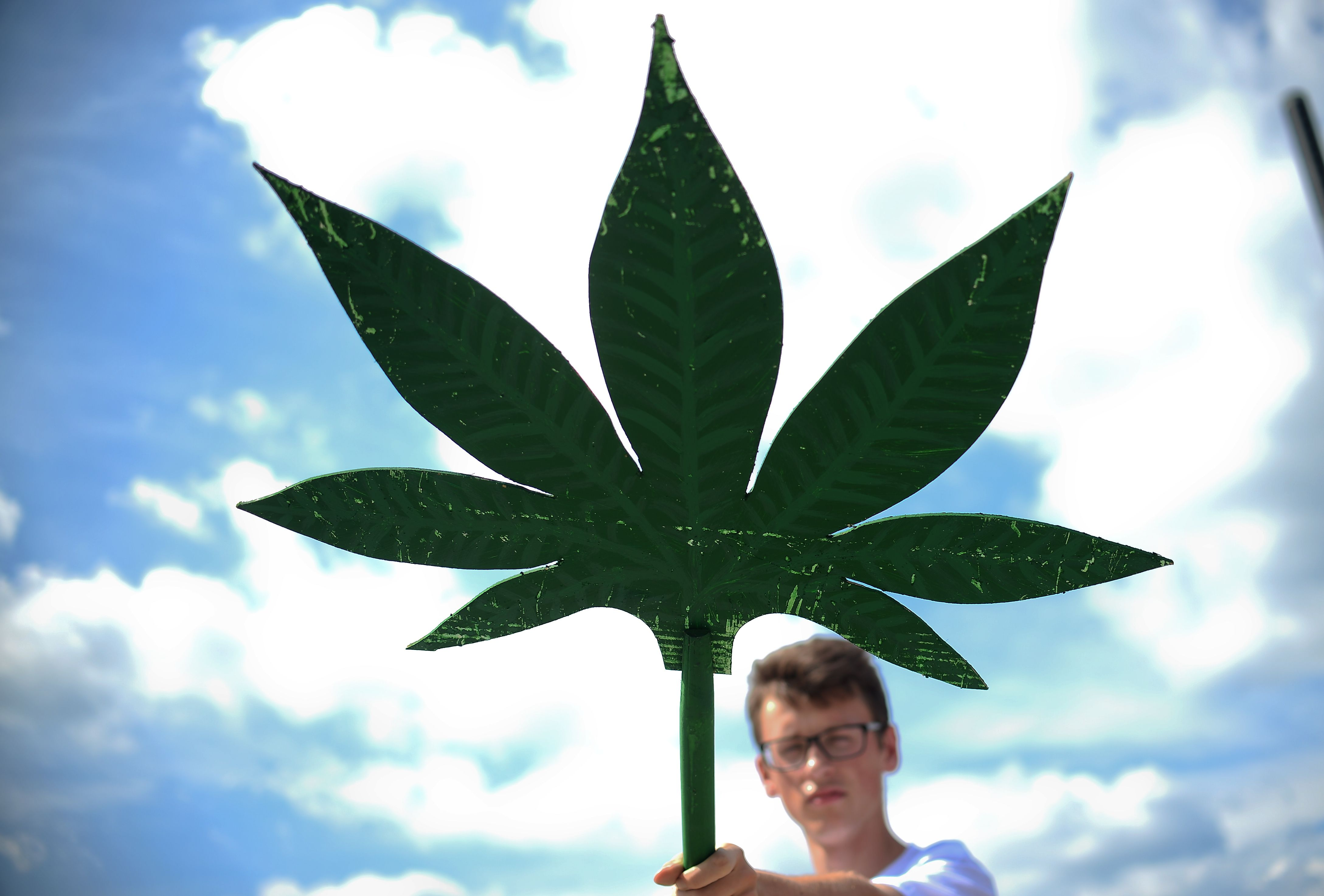 Breve guida alla cannabis light legale a domicilio for Domicilio legale
