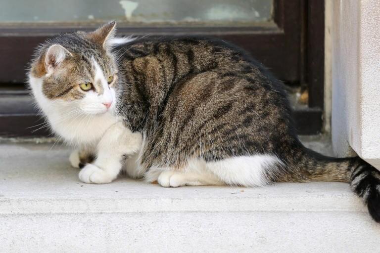 Cosa sappiamo della storia del gatto morto in una scuola di Gioia Tauro