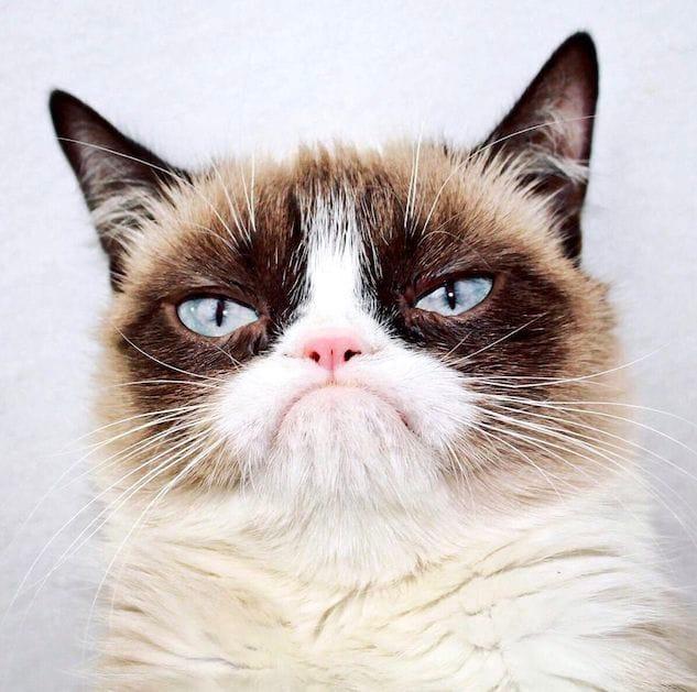 Grumpy Cat è morto