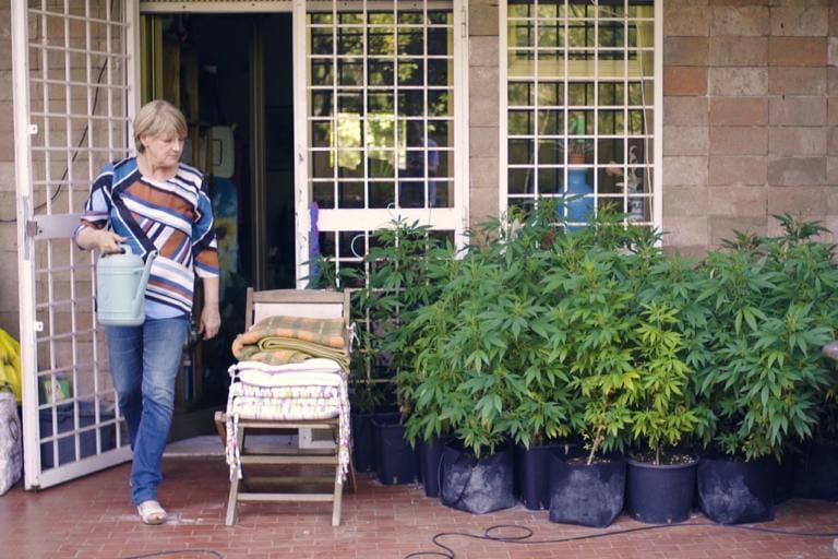 Arrestata Rita Bernardini per la sua coltivazione casalinga di cannabis