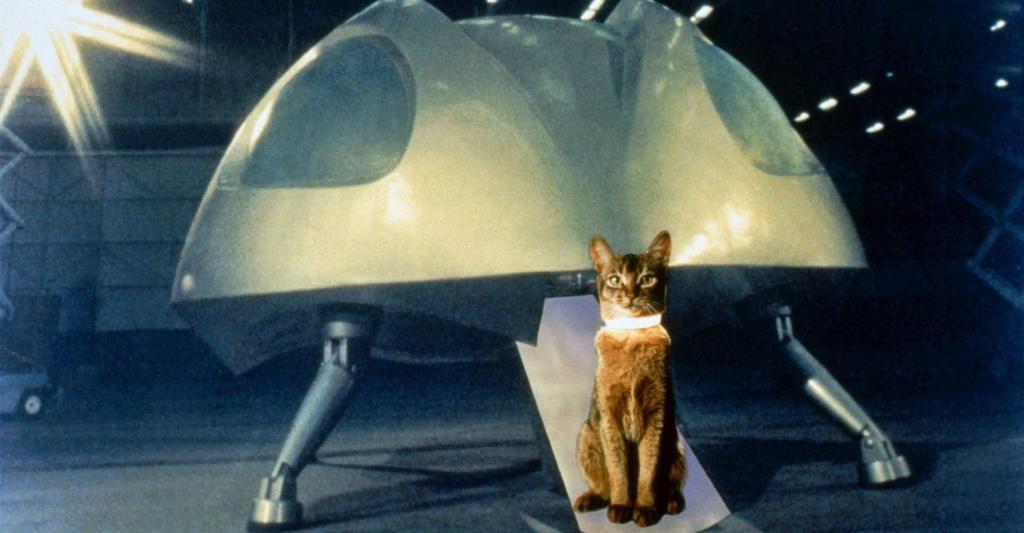un gatto venuto dallo spazio disney+