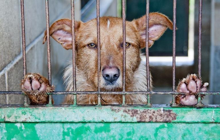 Il divieto di consumo di carne di cane e gatto in Cina, al m