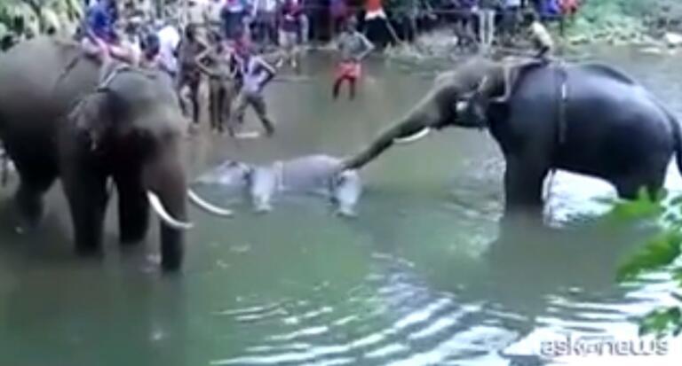 Alcuni politici hanno usato la storia dell'elefantessa morta